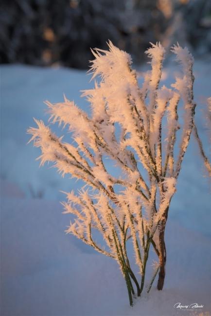 snieznik_2020_21_zima23.JPG