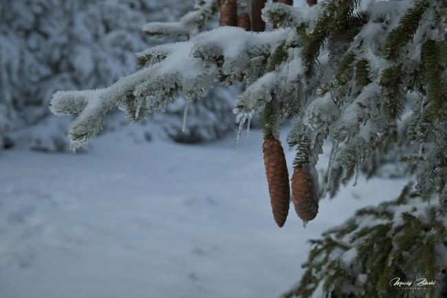 snieznik_2020_21_zima37.JPG