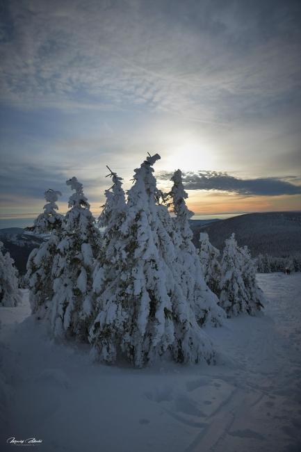 zima2019_2.jpg