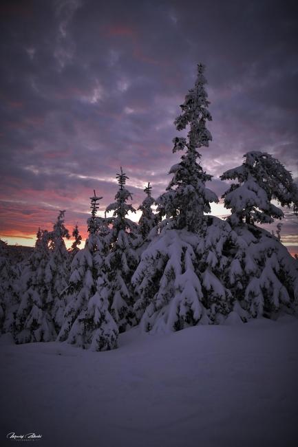 zima2019_23.jpg