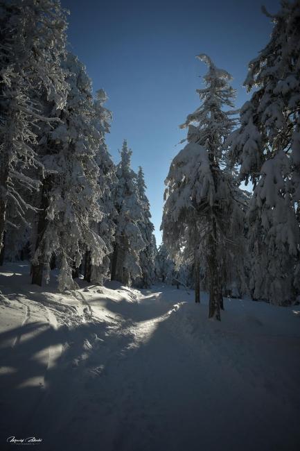 zima2019_44.jpg