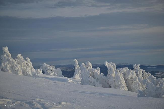 zima2019_6.jpg